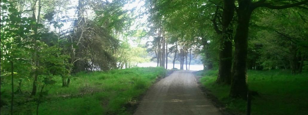 Castle Lake Walking Path